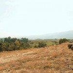 Еврейское счастье. 3-я серия «Кибуц – дело добровольное»